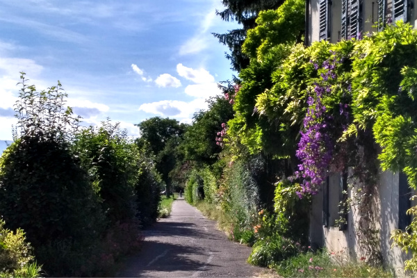 One of the roads on our walk to the view of Mont Blanc in Geneva, Switzerland.