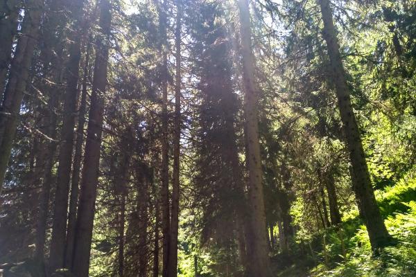 Walking through the forest in Lauterbrunnen, Switzerland.